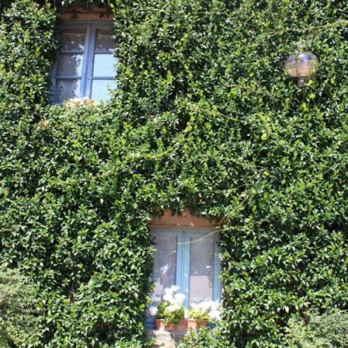dwa okna i rośliny