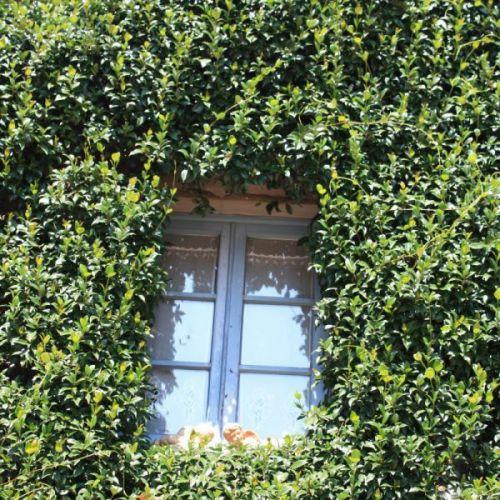 okno i rośliny